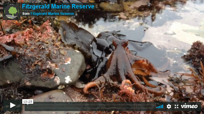 Fitzgerald Marine Reserve, Click To Watch Video On Vimeo