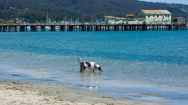 A Dog Enjoying Swim At Pillar Point Harbor