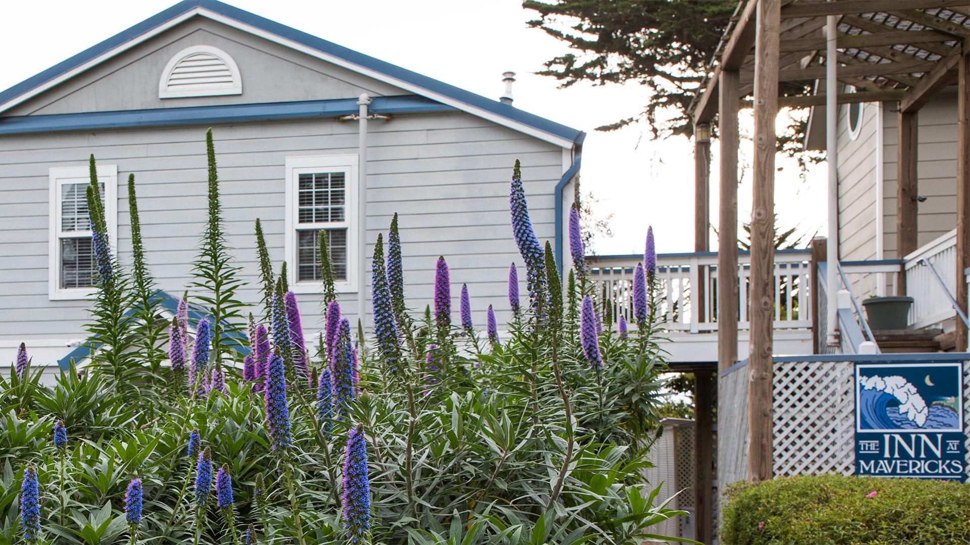 Inn at Mavricks In Springtime With Pride Of Madeira Flowers